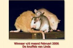 feb2006