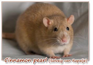 cinnamon pearl