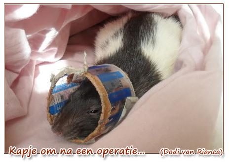 kapje om na operatie