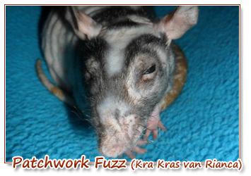 patchwork fuzz