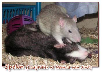 LadyKiller vs Nomad