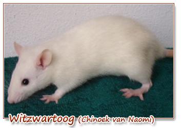 witzwartoog